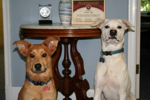 Duke and Cameron, Receptionists